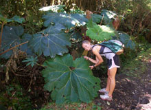 A student takes biological samples from under a large tree in Costa Rica